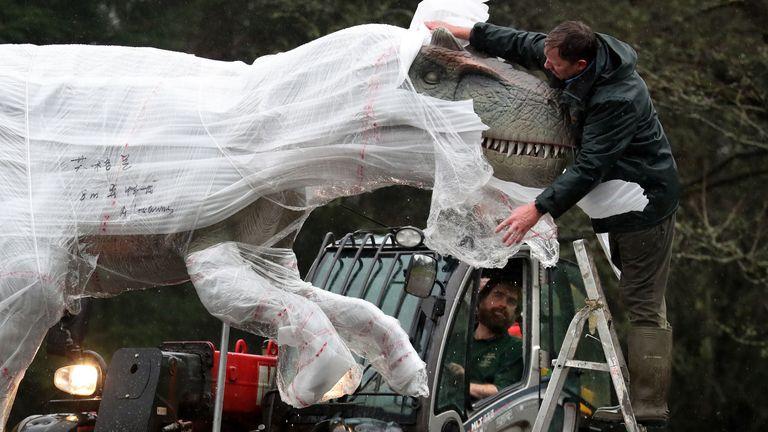 Gary Gilmour from Blair Drummond Safari Park unwraps and checks an Allosaurus at the safari park