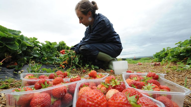 Many farms rely on seasonal workers
