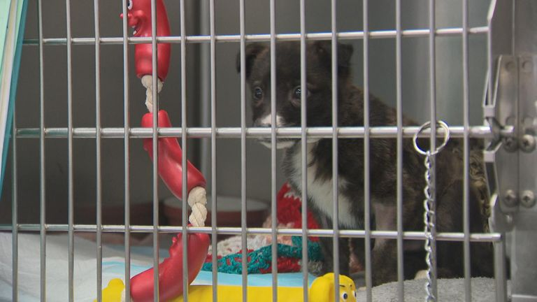 Puppies and kittens are being taken away from their mothers before they are eight weeks old