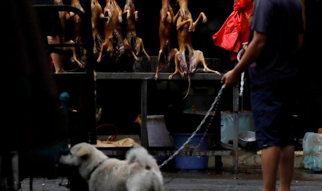 Coronavirus: China to reclassify dogs as pets rather than livestock in response to COVID-19 outbreak