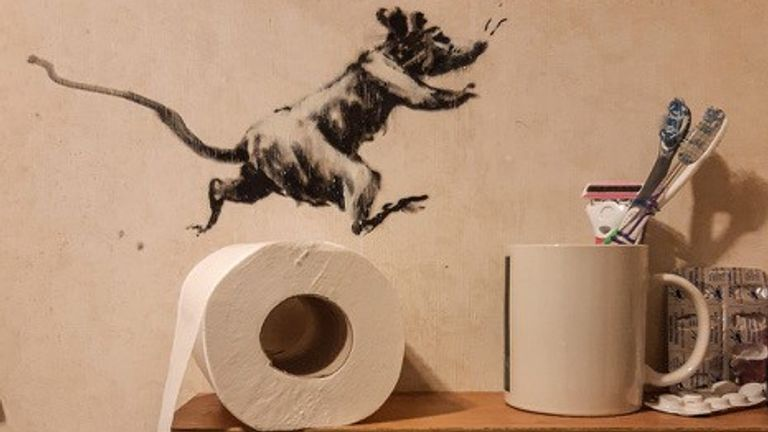 A rat is seen running on a toilet roll
