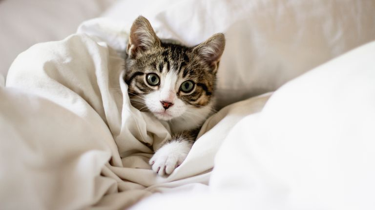 The British Veterinary Association has suggested cats stay indoors