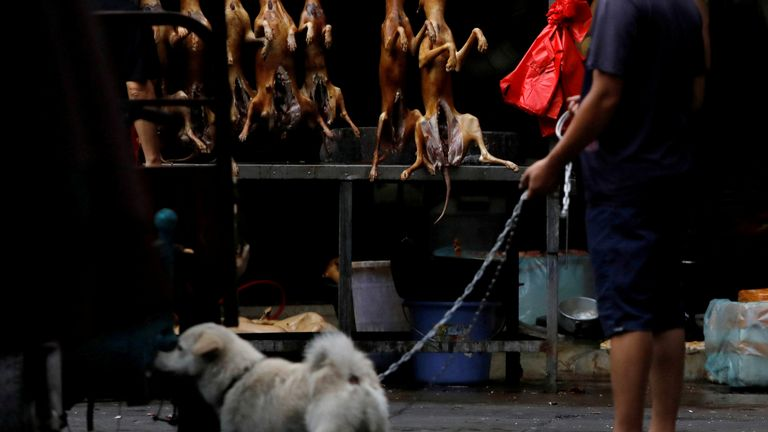 Butchered dogs are seen at a meat festival in Yulin