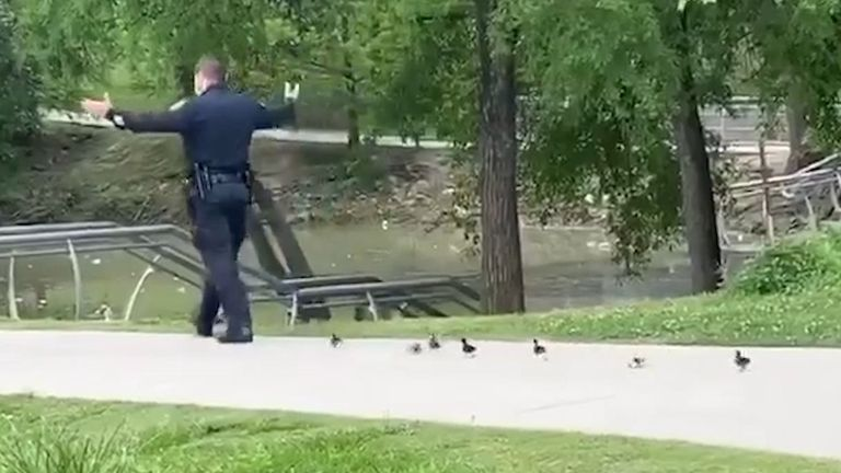 Ducklings follow officer back to pond
