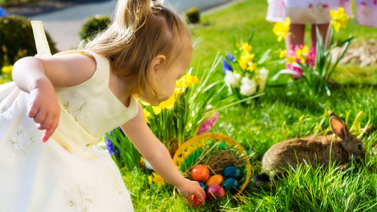 Children on an Easter Egg hunt on a meadow in spring, in the foreground a living Easter bunny is waiting and a girl finds Easter eggs (Children on an Easter Egg hunt on a meadow in spring, in the foreground a living Easter bunny is waiting and a girl