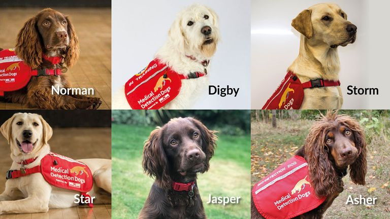 These are the six dogs who will be trained initially