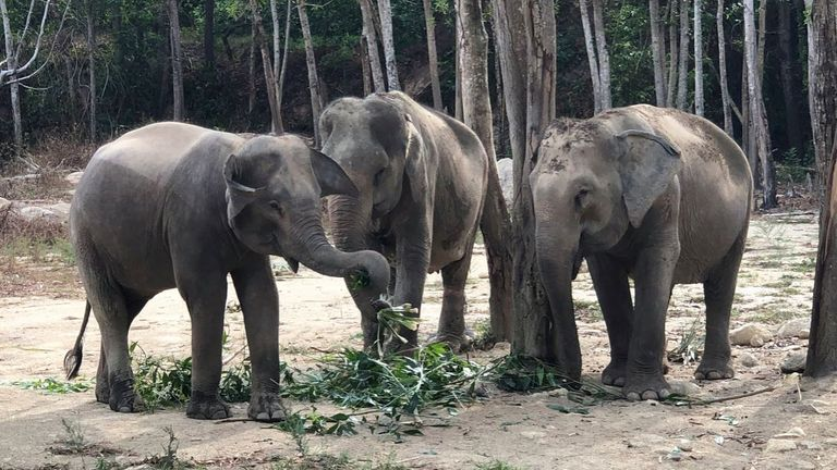 Tree Tops Elephant Reserve