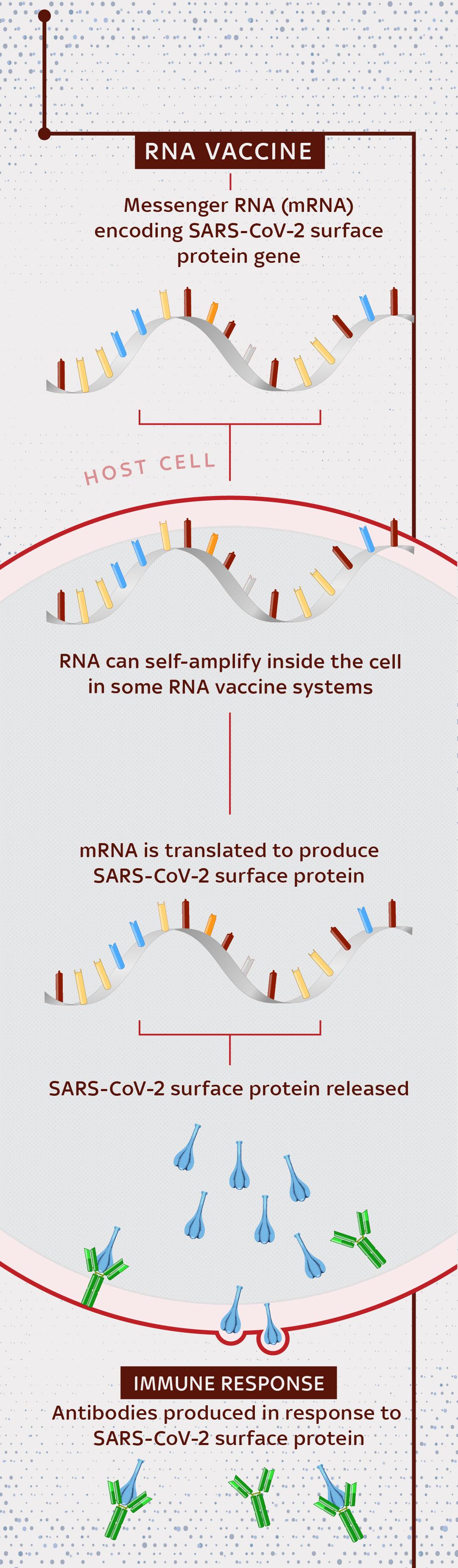 RNA vaccine type