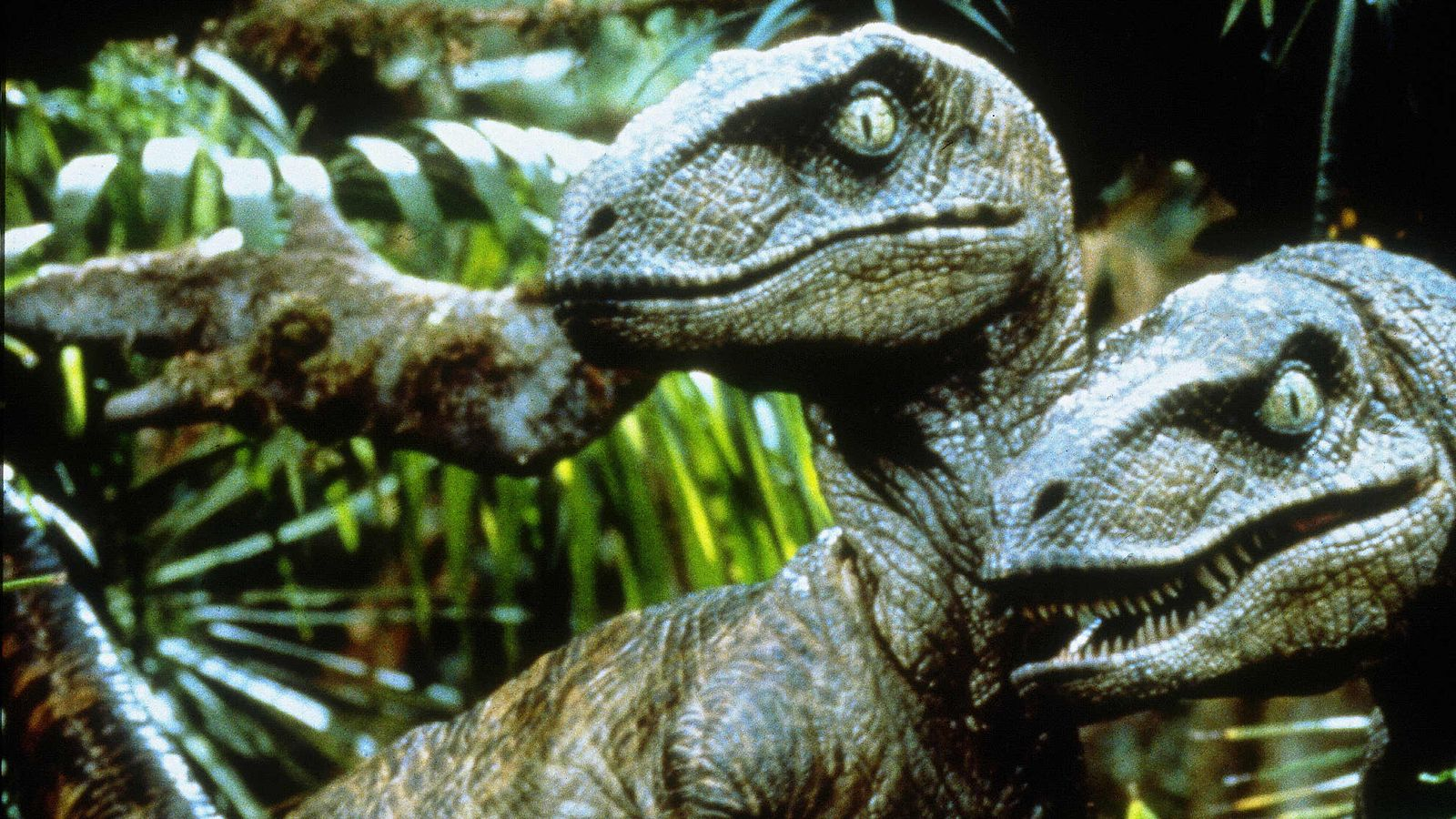 'Jurassic Park was wrong': Raptors hunted alone and not in packs, says study Skynews-velociraptor-jurassic-park_4985121