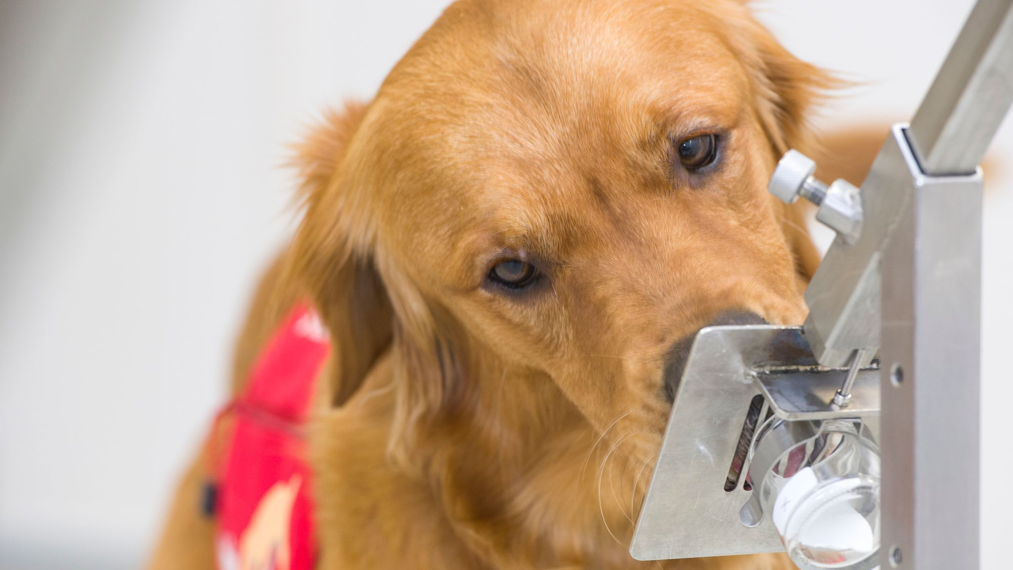 Covid Dogs Could Sniff Out Up To 250 People An Hour For Coronavirus Uk News Sky News