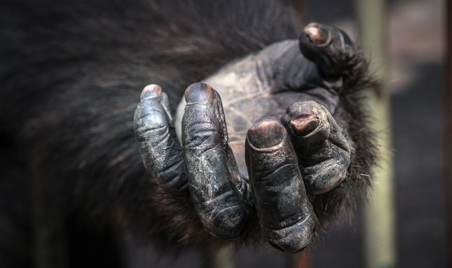 German police investigate discovery of ape's hand and foot in forest