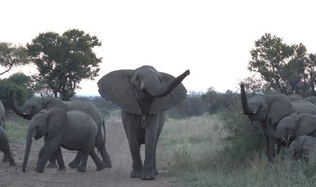 Coronavirus: Survival of 'big five' game reserve rests on return of tourists soon