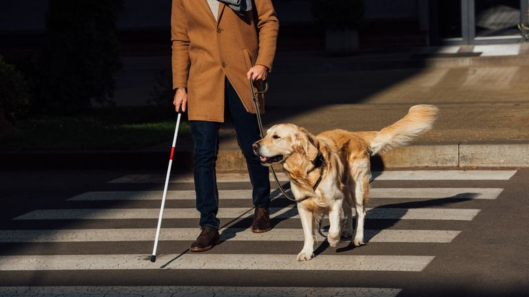 "The Royal National Institute of Blind People said the government needs to give blind and partially-sighted people support so they can leave their homes ""confidently"". File pic"