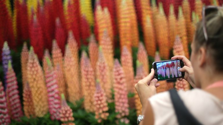 This year's five-day flower show will be held online