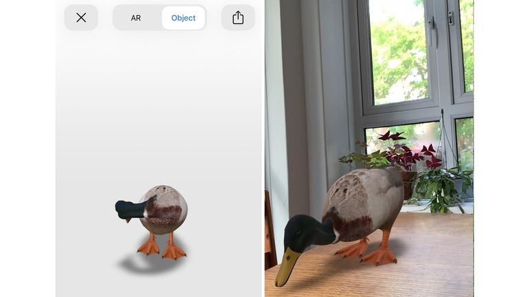 A duck is also available as an AR object