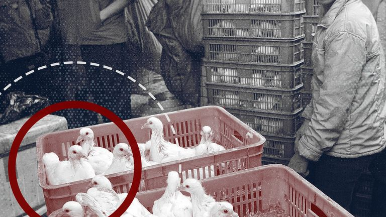 Animal markets have been dubbed the pathogen cafeterias