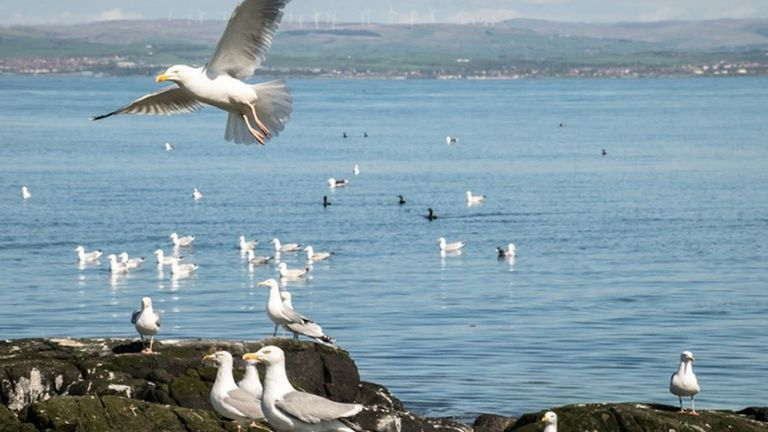 Lady Isle is a small, uninhabited island, in the Firth of Clyde, home to many different species of seabird