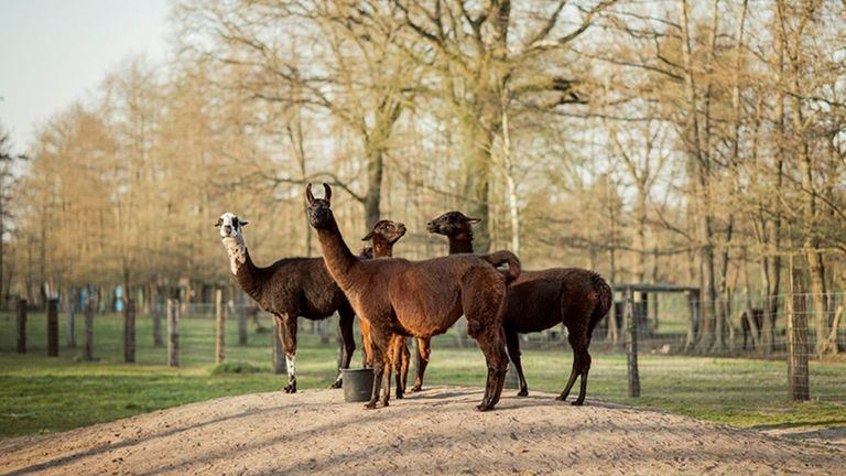 Winter is being kept on a farm in the Belgian countryside. Pic: Tim Coppens