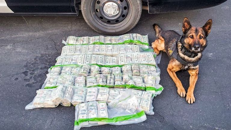Police dog Beny with the haul. Pic: Facebook/CHP - Mercedic