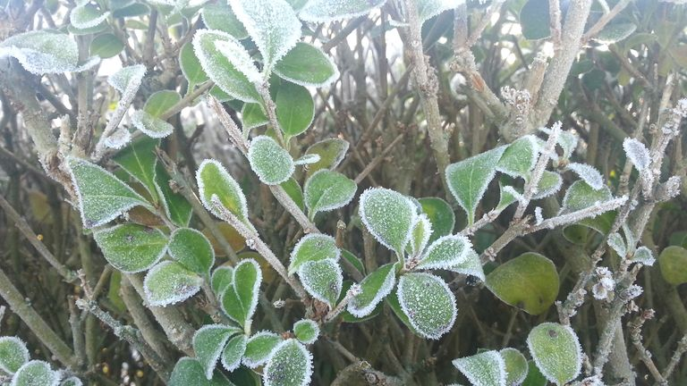 Frost in Northern Ireland. File pic