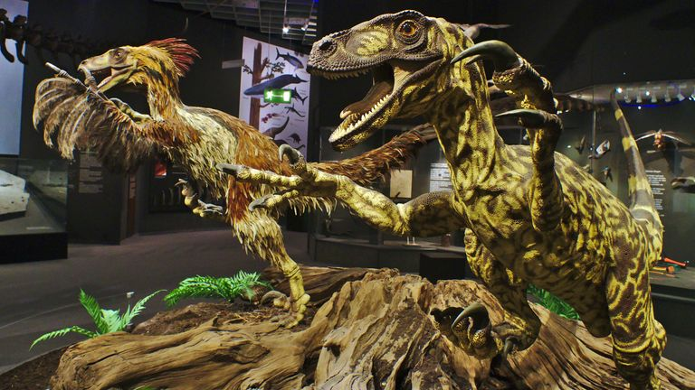 Modern feathered and outdated scaly raptor models. Pic: Westphalian Museum of Natural History