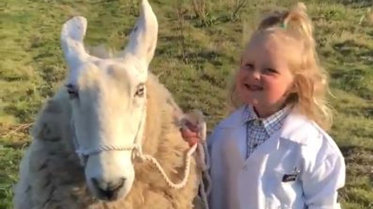 Three-year-old Barley expertly decided her sheep was white, then confirmed it is a Border Leicester