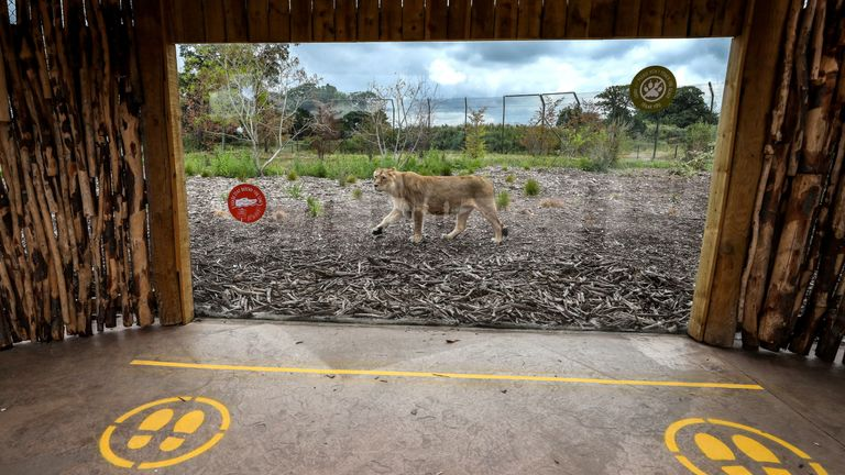 Social distancing measures at Chester Zoo after the attraction launched a campaign to raise money to help keep the zoo running and the animals cared for following the government's confirmation that the zoo may have to stay closed indefinitely. PA Photo. Picture date: Thursday June 4, 2020. Photo credit should read: Peter Byrne/PA Wire