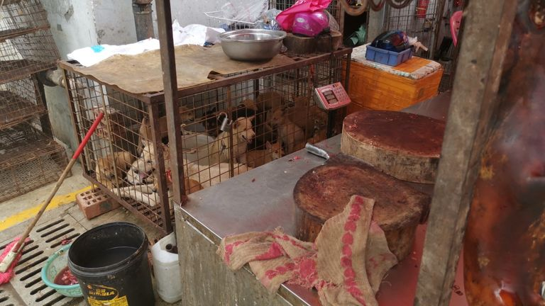 Dogs being held in a cage, close to a butchery table.