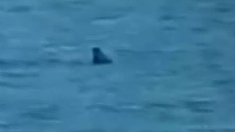 Shark spotting sweeping around Dubrovnik beach