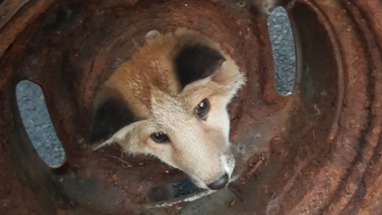 The fox's head was lodged in a wheel. Pic: Knightswood Community Fire Station