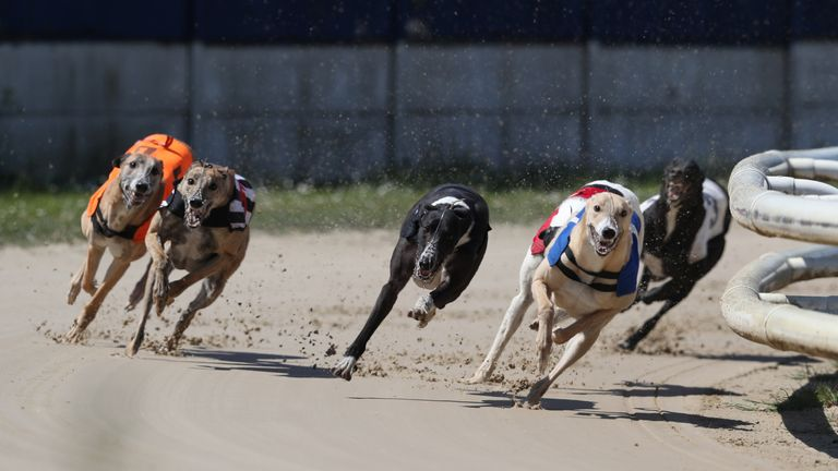 Greyhound racing is under way at Perry Barr