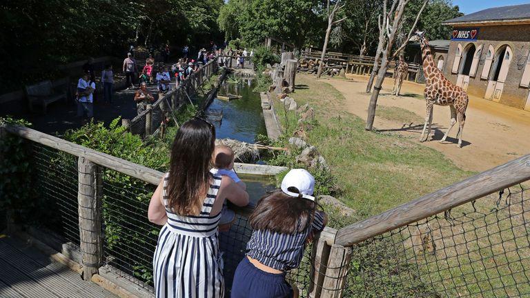 Visitors at the giraffe enclosure at London Zoo