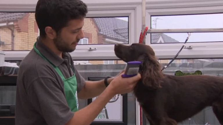 Phil Caso, 23, runs his own dog grooming business