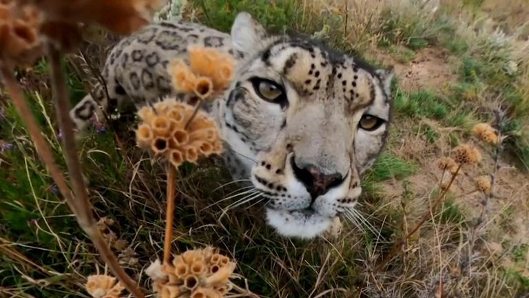 The United Nations Environment Programme (UNEP) has drawn attention to images of a snow leopard living in the mountains of Kyrgyzstan on World Environment Day to highlight links between humans and the natural world, increasingly under strain due to climate change.
