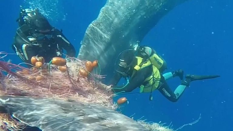 Whale freed from fishing net