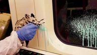 The street artist Bansky was filmed stencilling a London Underground train with a coronavirus message