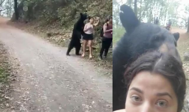 Plan to trap and relocate 'selfie bear' in Mexico