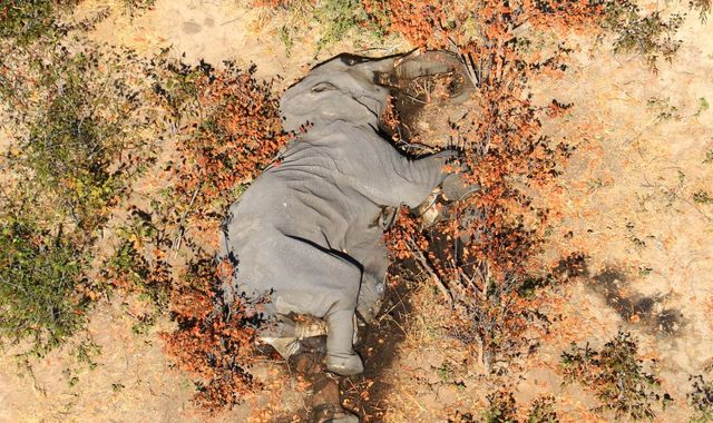 Elephant deaths: Mystery after hundreds of animals die in Botswana