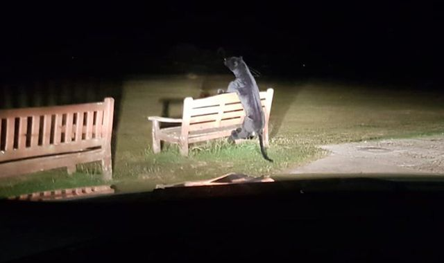 'Big cat sighting' in West Sussex was actually a large stuffed toy on a park bench, police say