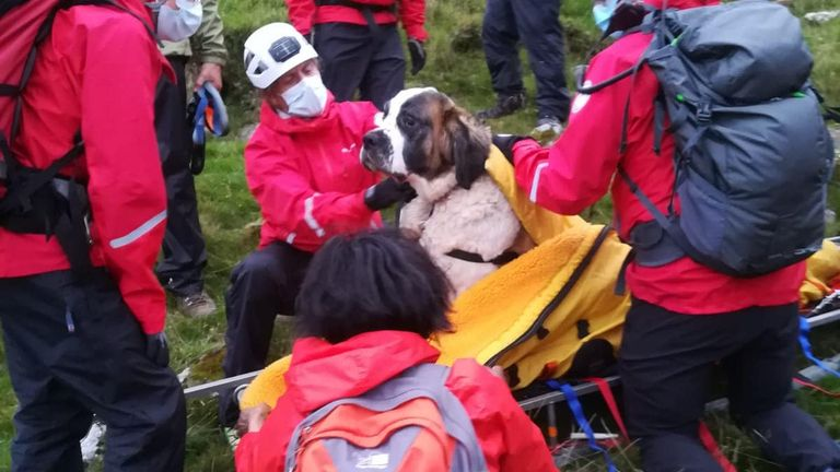 Rescuers used a few treats to get Daisy on the stretcher. Pic: Wasdale Mountain Rescue Team