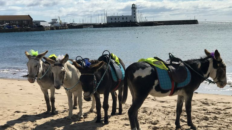 Donkey's on Scarborough beach