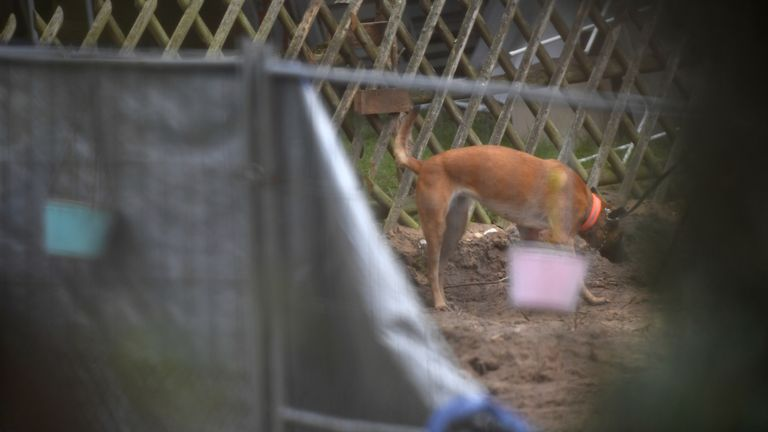 A sniffer dog is pictured at the site where police started digging in an allotment area near Hanover, Germany July 29, 2020, where Christian B, a suspect in the Madeleine McCann investigation lived for a while some years ago