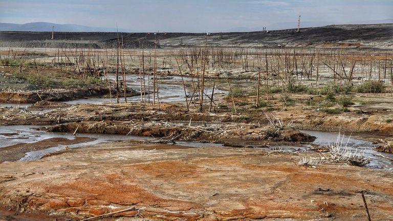 Dead forest near Norilsk, Russia. Pic: Anastasya Leonova