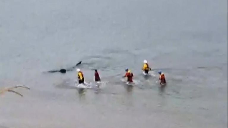 A lifeboat crew attempted to persuade the shark to go out to sea, to no avail