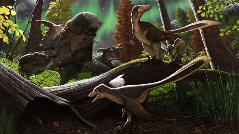 An artist's impression of dromaeosaurids dinosaurs that lived up to 145 million years ago