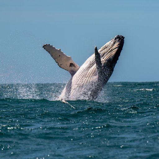 Humpback whale injures three women in Australia