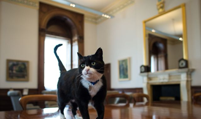Foreign Office chief mouser Palmerston to leave Whitehall for quiet life in the countryside
