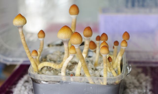 Terminally ill Canadians win right to use magic mushrooms for end-of-life stress