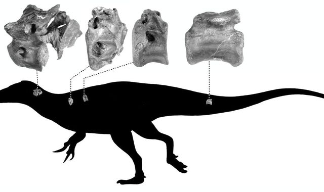 Bones of close relative of Tyrannosaurus rex discovered on Isle of Wight