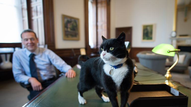 Chief mouser' Palmerston, a rescue cat recruited from Battersea Dogs and Cats Home explores his new surroundings in Permanent Under Secretary, Simon McDonald's office in the Foreign and Commonwealth Office in London.